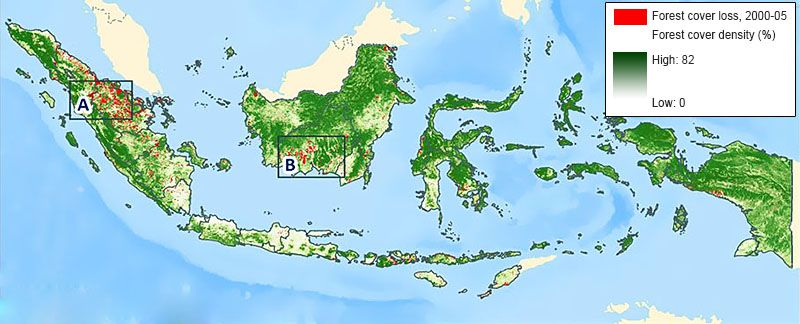 forest cover of Indonesia