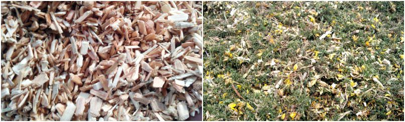 fuel pellet production raw materials - wood and grass wastes