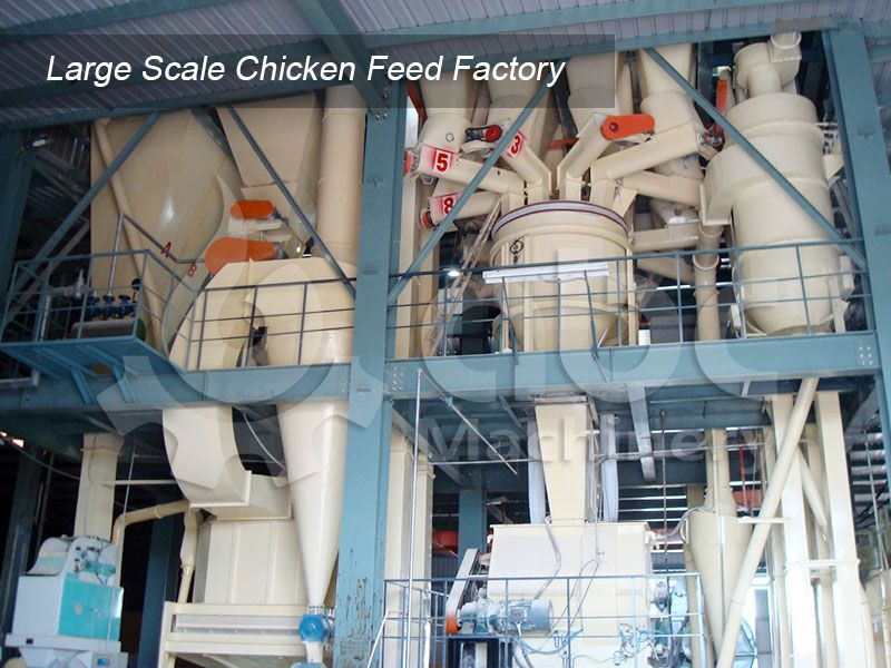 establish a large scale chicken feed production factory