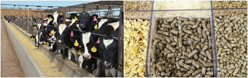 make feed pellets for livestock animals