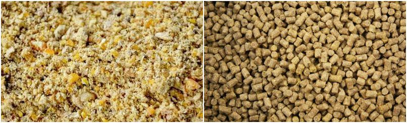 mash feed or pellets feed