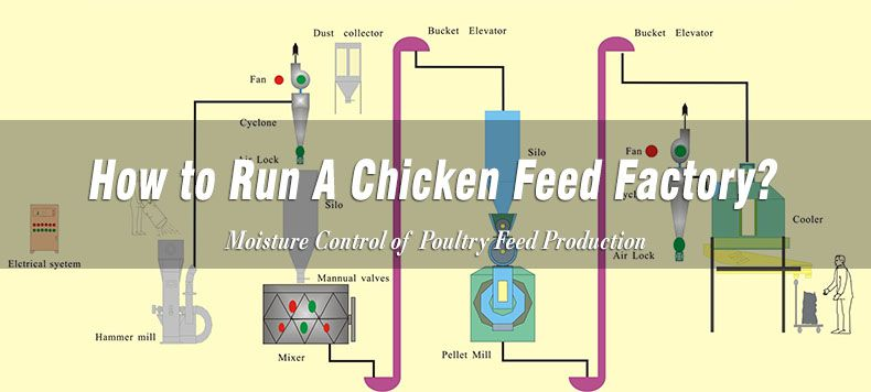 set up chicken feed mill plant