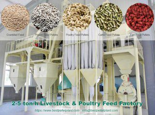 Points to Remember When Operating a Poultry Feed Factory