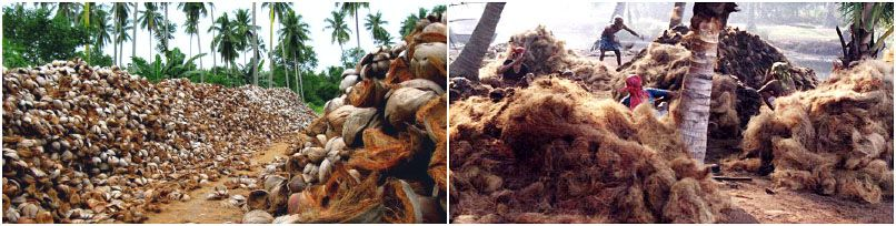 world coconut production